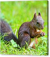 Squirrel Eating A Nut In The Grass Canvas Print