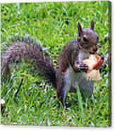 Squirrel Eats Mushroom Canvas Print