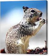 Squirrel Enjoying Lunch On The Beach Canvas Print