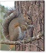 Squirrel Finds A Treat Canvas Print