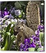 Squirrel In The Botanic Garden-dallas Arboretum V2 Canvas Print