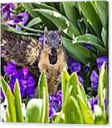 Squirrel In The Botanic Garden Canvas Print