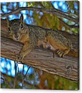 Squirrel Looking Down On Viewer Canvas Print