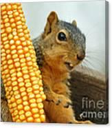 Squirrel Canvas Print
