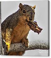 Squirrel Lunch Time Canvas Print