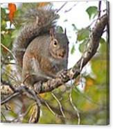 Squirrel On Branch Canvas Print