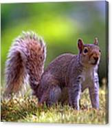 Squirrel On Grass Canvas Print