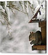 Squirrel On The Bird Feeder Canvas Print