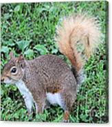 Squirrel On The Ground Canvas Print