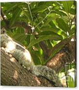 Squirrel On The Tree Canvas Print