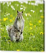 Squirrel Patrol Canvas Print
