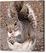 Squirrel Possessed Canvas Print