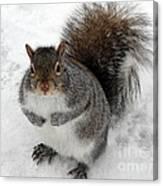 Squirrel Saying Feed Me Please At Niagara Falls Canvas Print