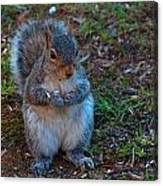 Squirrel Seeds Canvas Print
