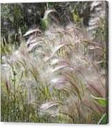 Squirrel Tail Grass Panguitch Lake Utah Canvas Print