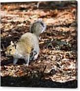 Squirrel Time Canvas Print