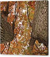 Squirrel's Vision Of A Good Day Canvas Print