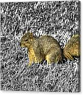 Squirrling Around Looking For Nuts Canvas Print