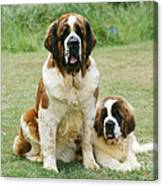 St Bernard With Puppy Canvas Print