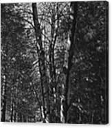 St-denis Woods 2 Canvas Print