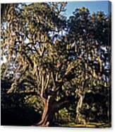 St. Gabriel Oak Canvas Print