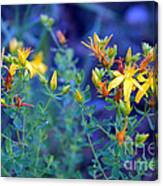 St John's Wort In The Forest Canvas Print