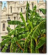 St. Louis Cathedral And Banana Trees New Orleans Canvas Print
