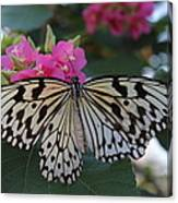 St. Louis Zoo Butterfly Canvas Print