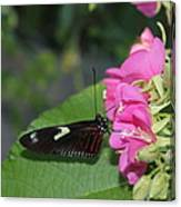 St. Louis Zoo Butterly Canvas Print