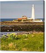 St Marys Lighthouse With Daffodils Canvas Print