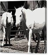 Stable Pair Canvas Print