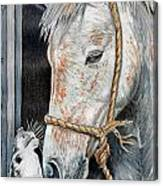 Stablemates Canvas Print