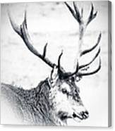 Stag In Black And White Canvas Print