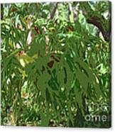 Staghorn Cutout Canvas Print