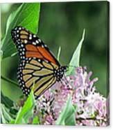 Marvelous Monarch Canvas Print