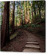 Stairs Into The Woods Canvas Print