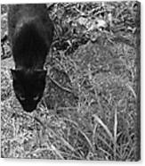 Stalking Cat Canvas Print