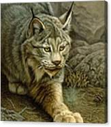 Stalking Lynx Canvas Print