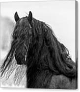Stallion Beauty Canvas Print