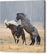 Stallion Challenge Canvas Print