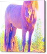 The Stallion Came To Me In A Dream Canvas Print