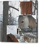 Stallions Collage There Is A Connection Canvas Print