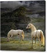 Stallions Of The Gods Canvas Print