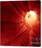 Burgundy Petal Canvas Print