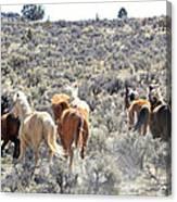Stampede Of Wild Horses Canvas Print
