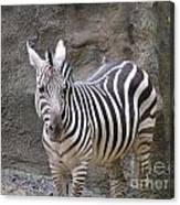 Standalone Zebra Canvas Print