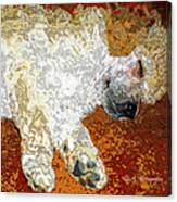 Standard Poodle Puppy Dozing Off Canvas Print