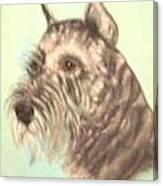 Standard  Schnauzer Canvas Print