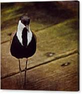 Standing Bird Canvas Print