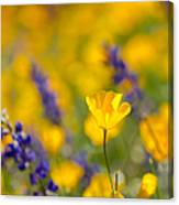 Standing Out In A Crowd Canvas Print